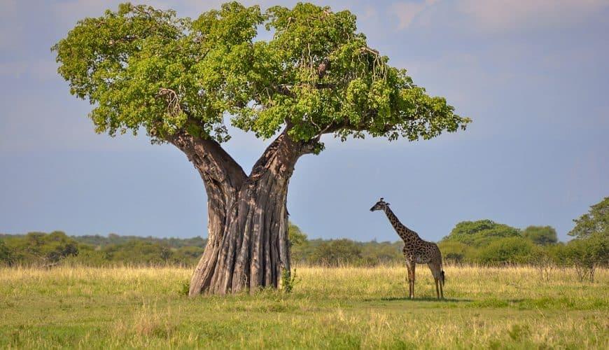 Танзания: 3 дня на сафари + отдых на о. Занзибар в хороших отелях (11 ночей)