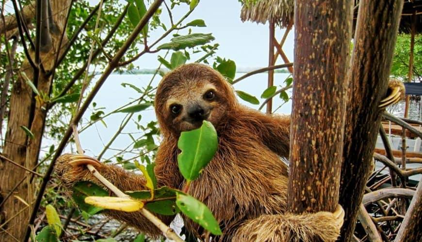 Чудеса природы Коста-Рики в экскурсионном туре за 2999€